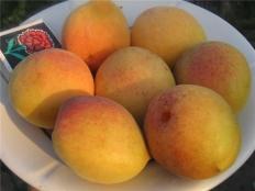 абрикос Сульмона (Sulmоnа)