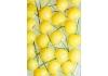Жёлтая вишня