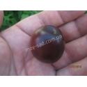 Вишнево-сливовый гибрид ( СВГ ) Мэйнор
