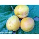 абрикос Персиковый