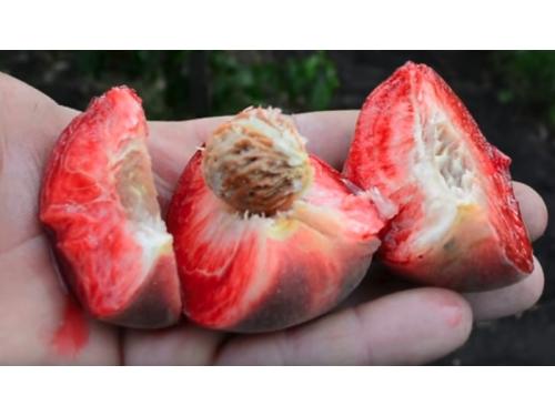 Персик Ред Робин (красномясый)