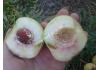 персик Бургунди (краснолистный персик)
