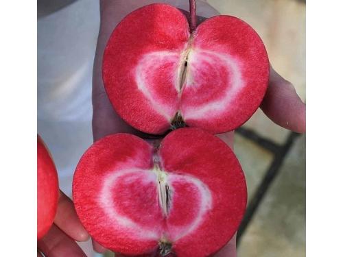Яблоня красномясая Ред Пешн