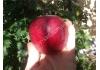 яблоня Ред Джонапринц (Черный Принц)