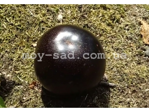 Диплоидная слива Блек Даймонд /Black Diamond®/