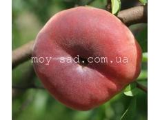 Персик инжирный Пинк Ринг (Pink Ring)