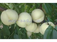 Персик Iсе Pеасh® (Айс Пич)